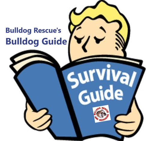 Bulldog Rescues Bulldog Guide