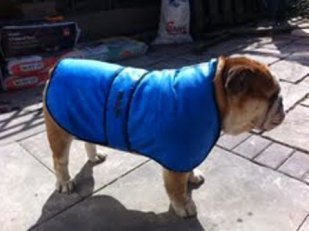 KEEP COOL DOG COATS (CLICK TO CHOOSE COLOUR)