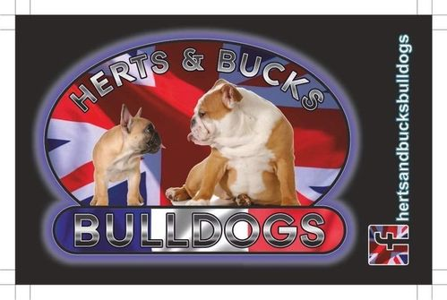 BDR Herts and Bucks bulldog takeover